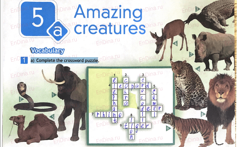 Spotlight 5. Workbook - Module 5. 5a Amazing creatures, ответ 1