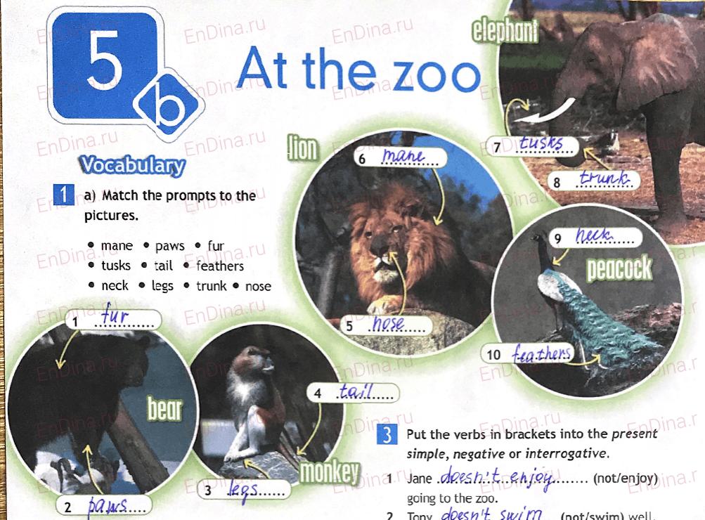 Spotlight 5. Workbook - Module 5. 5b At the zoo, ответ 1