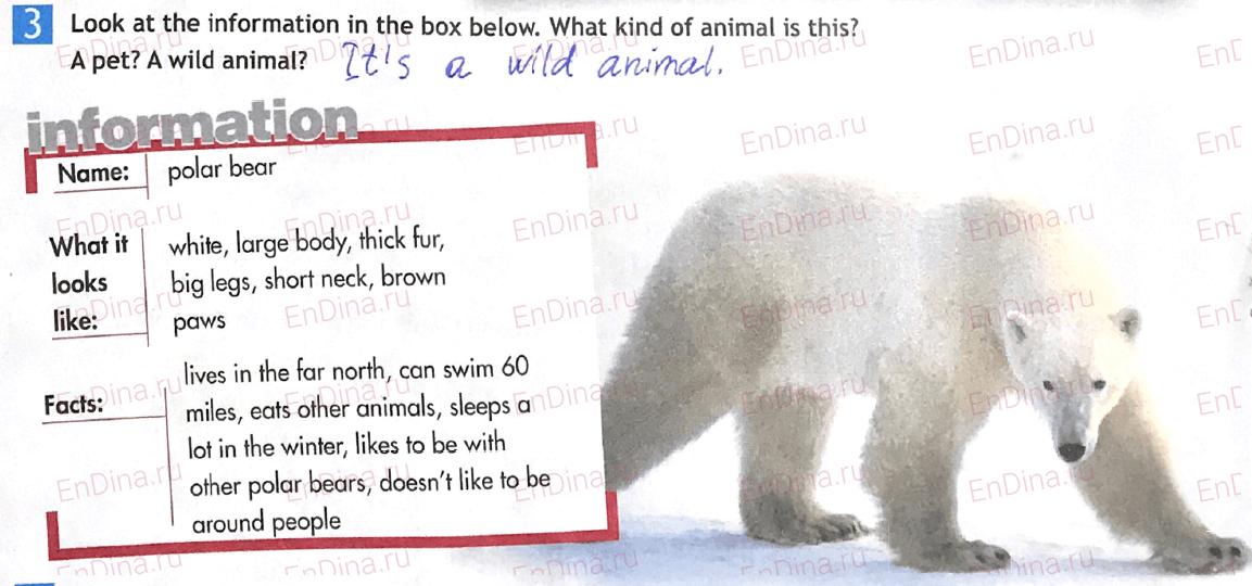 Spotlight 5. Workbook - Module 5. 5d Writing (a paragraph), ответ 4